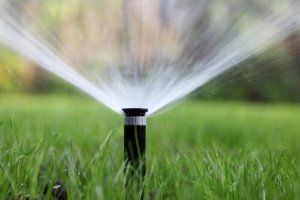 Should You Splurge On a Sprinkler System?